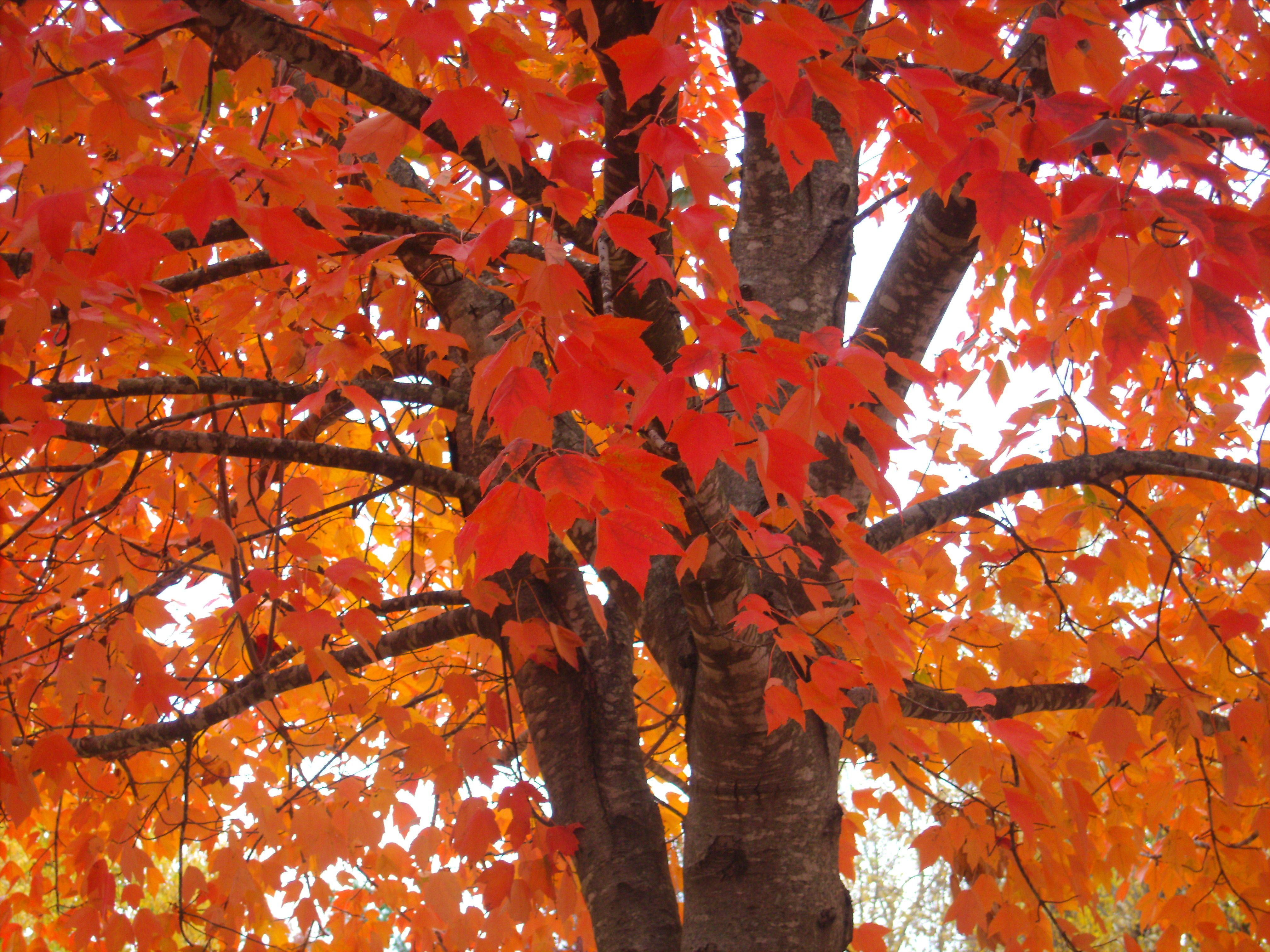 Pretty Fall Trees Autumn Trees Favorite Places Special Places