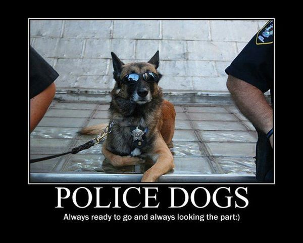 Pin By Louise Reid On All God S Creatures Police Dogs Military Dogs Military Working Dogs