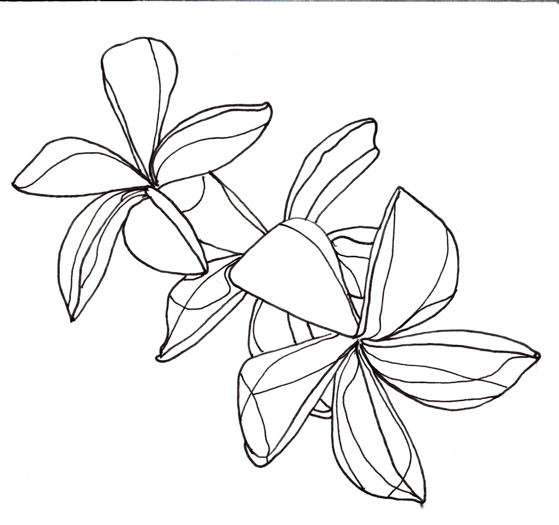 Line Drawing Flowers Plumeria Flower Line Drawings Flower Drawing Simple Line Drawings