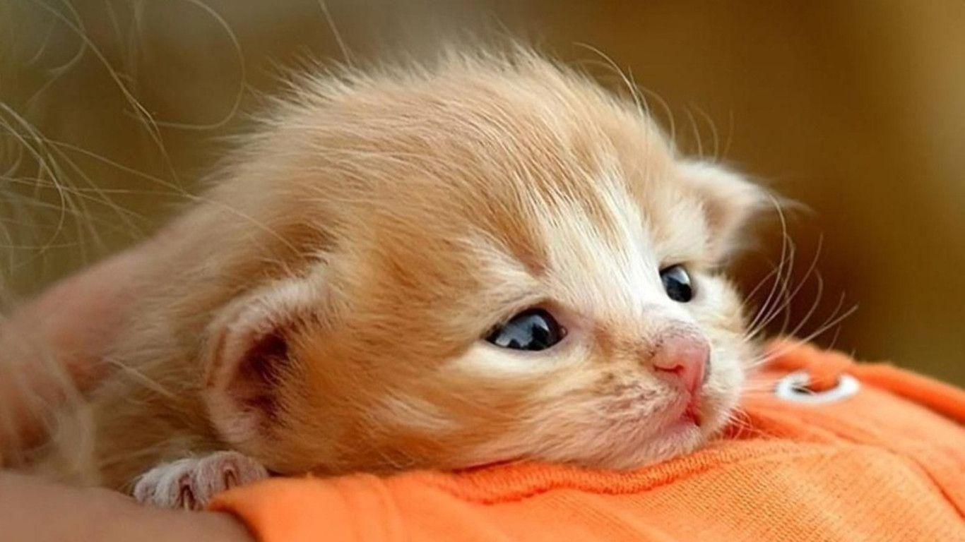 Baby Kitten Wallpapers Wallpaper Cave Cute Baby Cats Baby