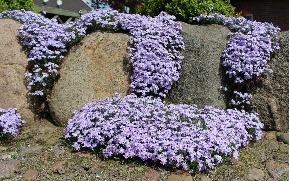 Растения башкортостана фото это самая