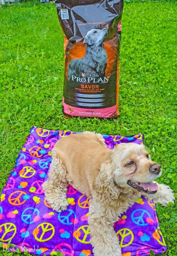 Diy Dog Summer Cool Off Pad Tutorial Pro Plan Petsmart Diy Dog