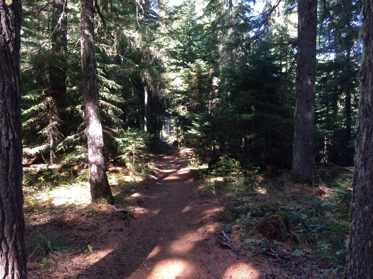 Timothy Lake Trail Mountain Bike Trail in