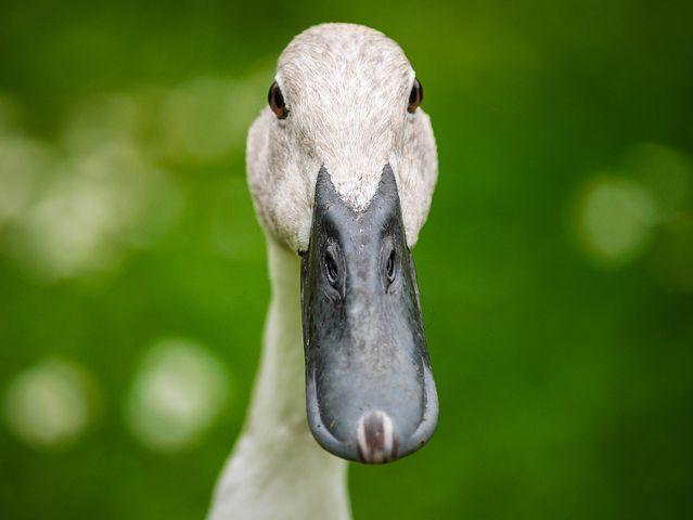 Editor S Choice Photos 20 Uccelli