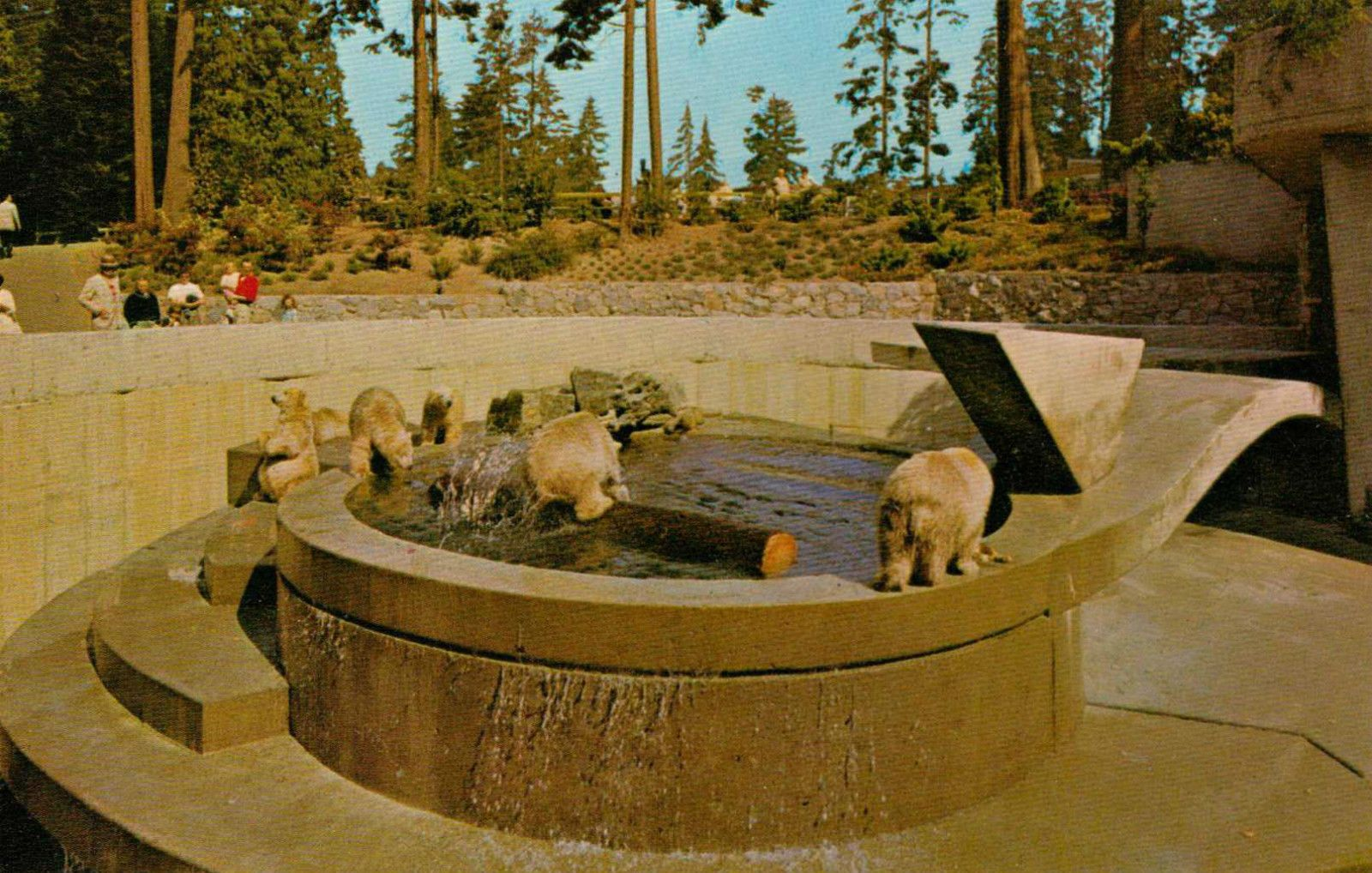 The Polar Bears In Stanley Park 60 S Stanley Park Vancouver