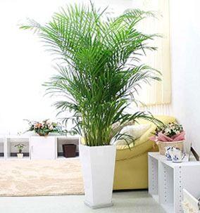 Encuentra m s informaci n sobre decoraci n de salas con for Plantas artificiales para interiores