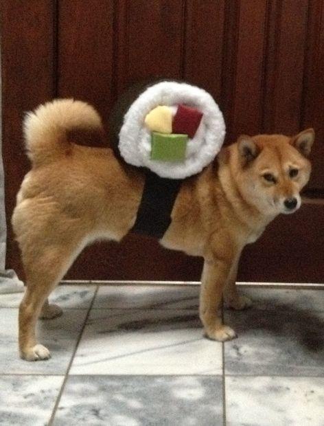 Sushi Roll Dog Costume Diy Pet Costumes Diy Dog Costumes Dog