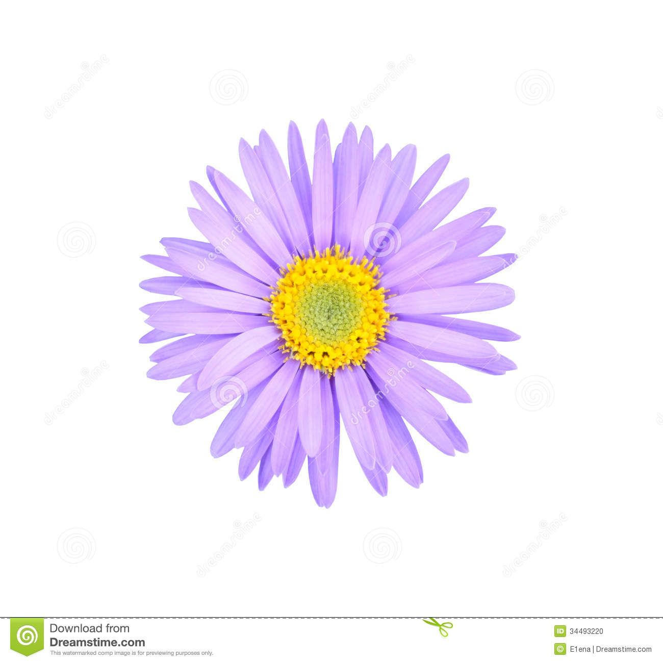 Aster Flower Tattoo Small Best Wallpapers Cloud Aster Flower Tattoos Aster Tattoo Birth Flower Tattoos