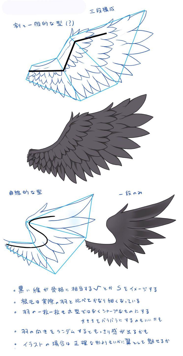 鳥コウモリ翼についての知識と描き方 畫法painting 翼 イラスト
