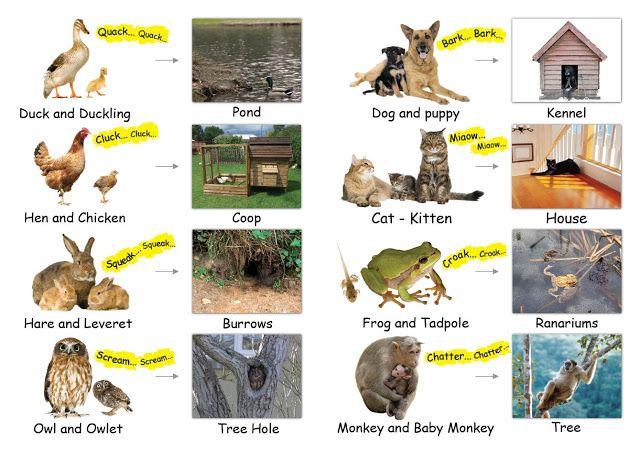 Pin By الحروف العربية On Kindergarten Animals And Their Homes Animals Young Ones Of Animals