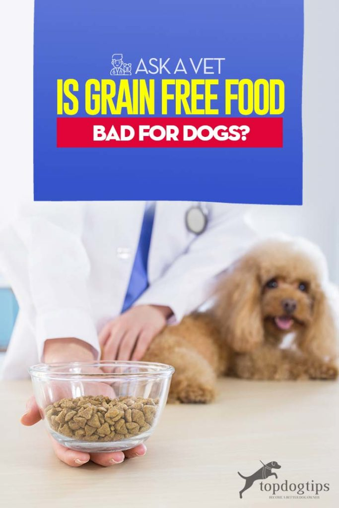Ask A Vet Is Grain Free Food Bad For Dogs Foods Bad For Dogs Grain Free Recipes Grain Free Dog Food