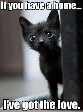 Ow... reminds me of Kiki, who came sick from the shelter and died of that disease within a few months....