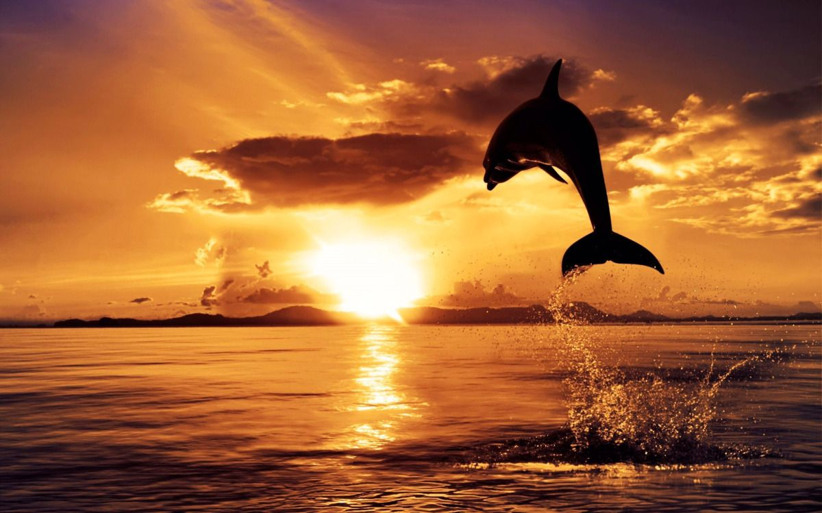 I Am Blessed To Be Alive Cancer Stories Dolphins Animal