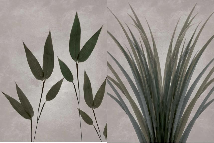 Botanic - graphics by anetmai.