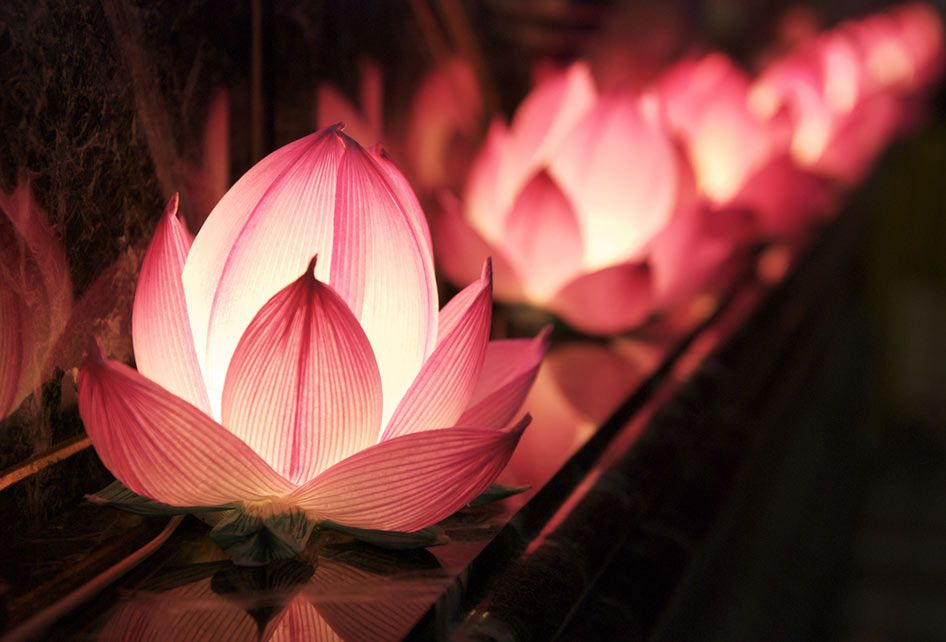 The lotus flower represents rebirth renewal and spiritual awakening the lotus flower represents rebirth renewal and spiritual awakening but the beautiful flower that you see floating effortlessly on top of the water had mightylinksfo