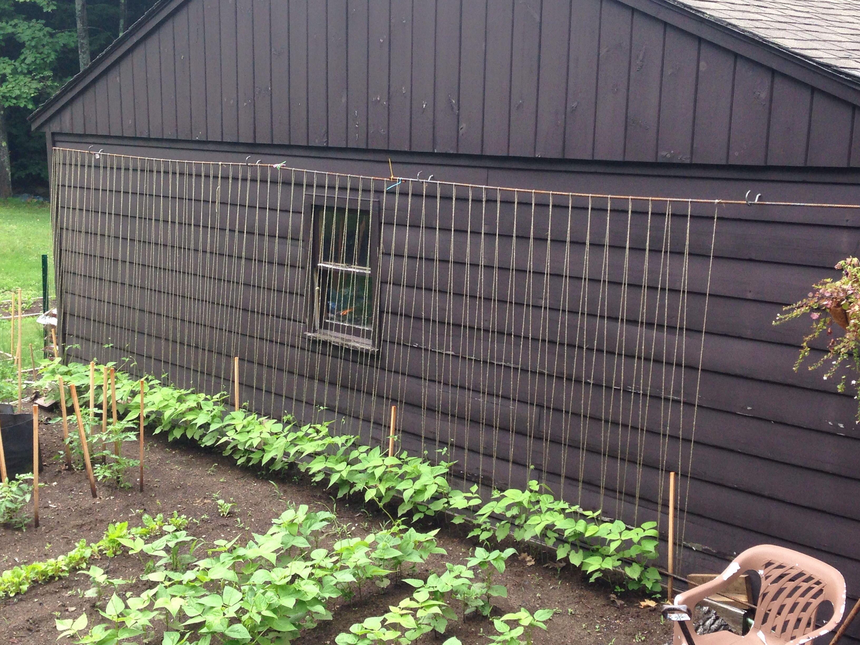 Green Bean Trellis Ideas Part - 48: This Years Green Bean Trellis Idea!! Looks Like It Gonna Work Great!