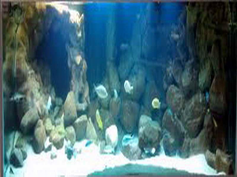 Stone cave aquarium decoration themes fish tank for Fish tank caves
