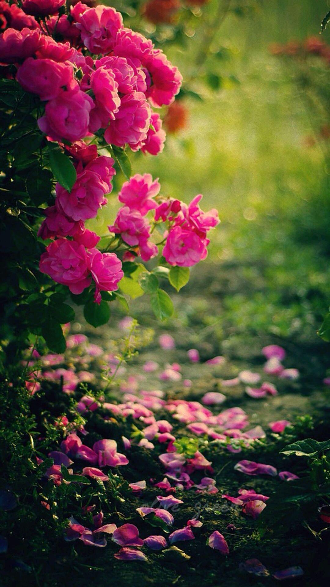 Pink Roses Flowers Mobile Wallpaper Nature Photography Flowers Wallpaper Nature Flowers Hd Nature Wallpapers Flower wallpaper hd mobile