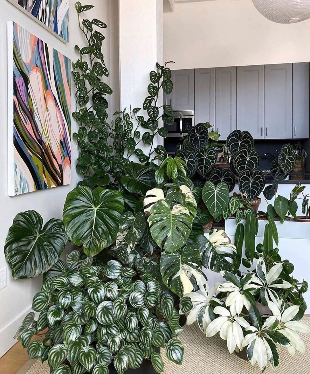 Zz Botanical And Home On Instagram A Beautiful Display