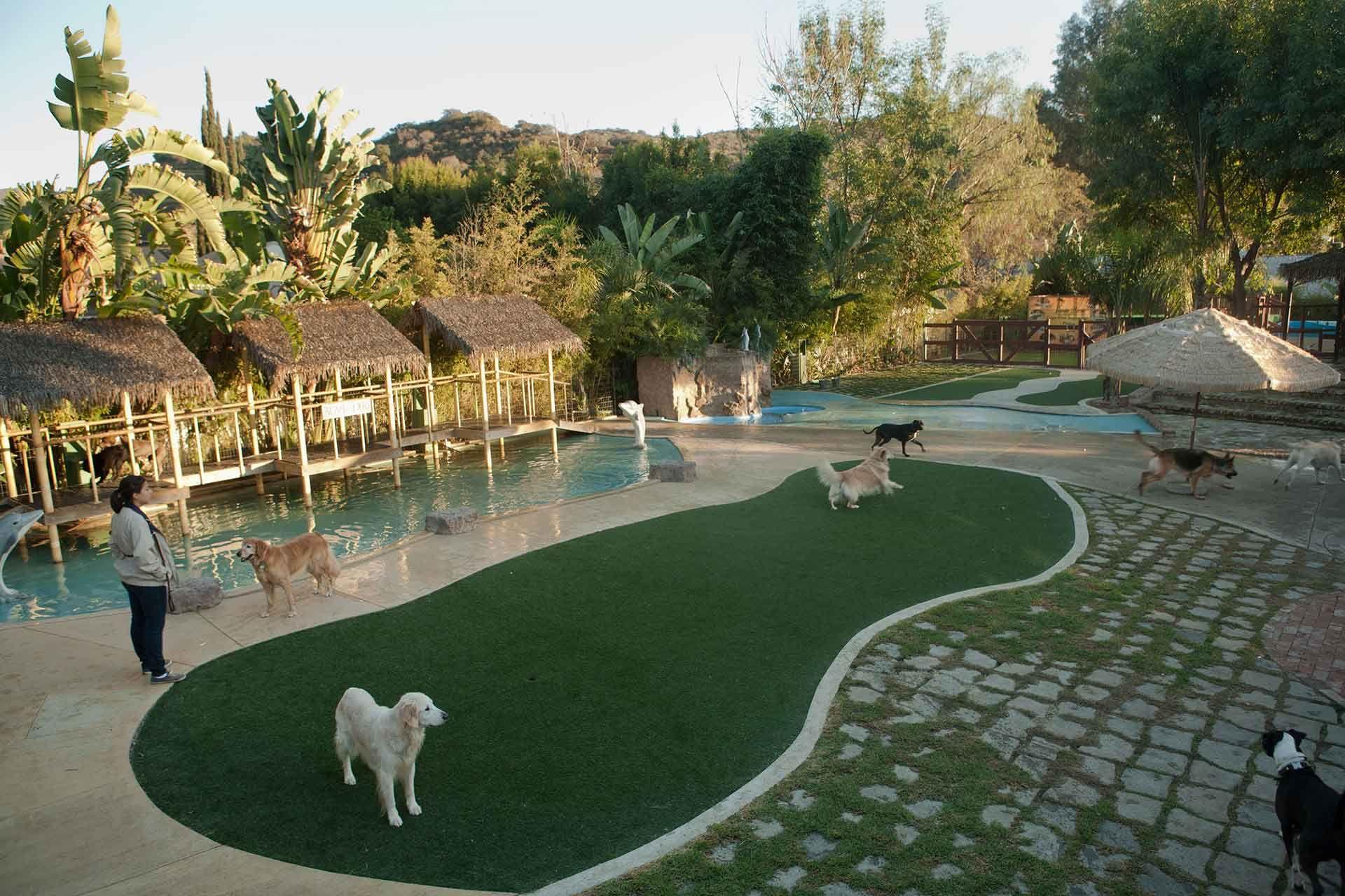 IMG_81288.jpg (1920×1280) Pet resort, Dog boarding, Dog