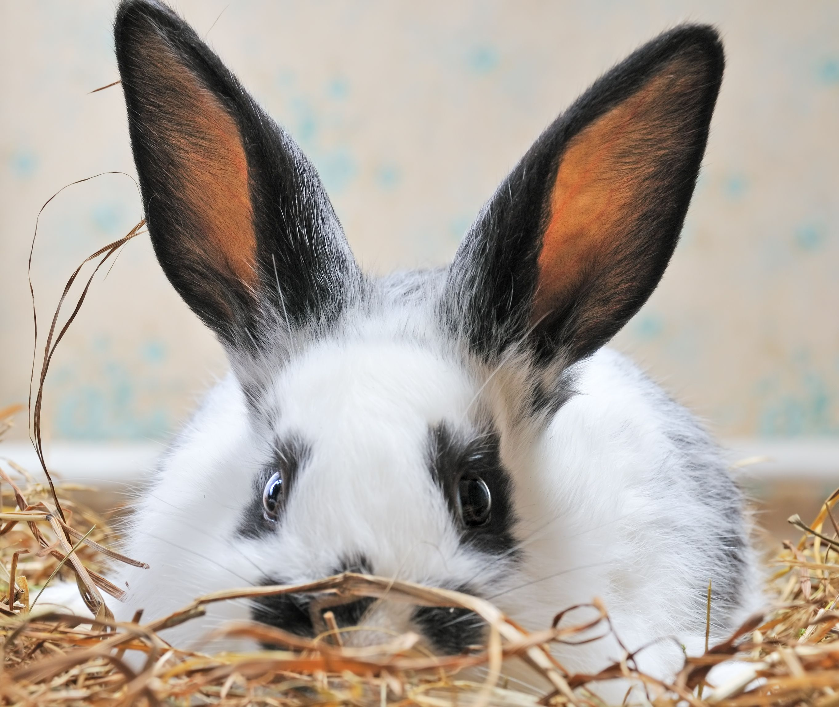 The online store, Gifts for rabbit lovers Pet bunnies