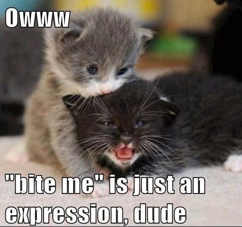 baby animal images with captions | Cute Funny Baby Animals ...