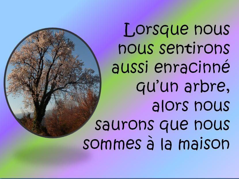 Enracinement de l'arbre de vie #citation
