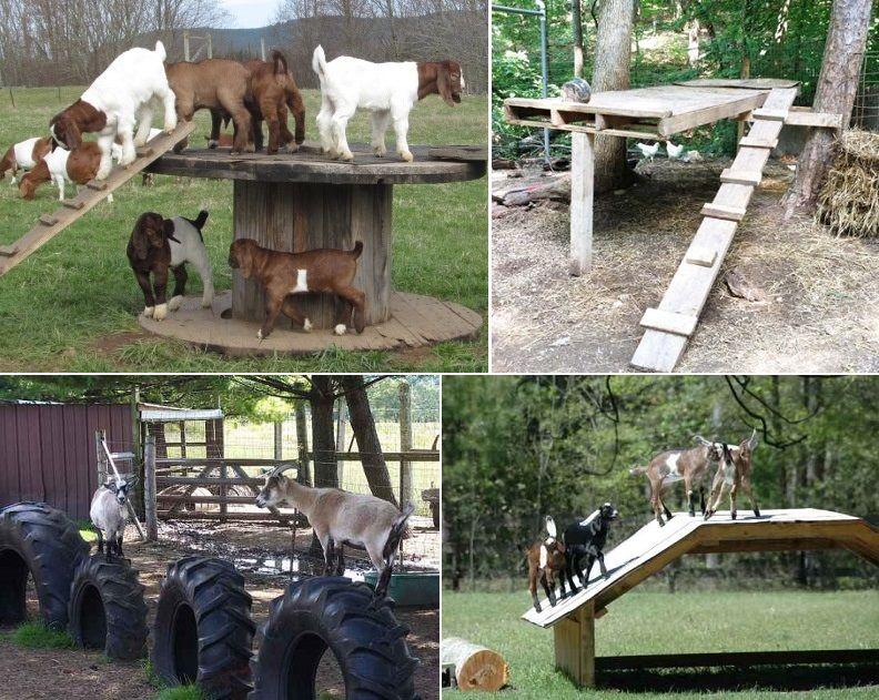 Diy Spielzeug Fur Ziegen Um Sie Beschaftigt Zu Halten Dekorationen Ziege Zwergziegen Spielzeug