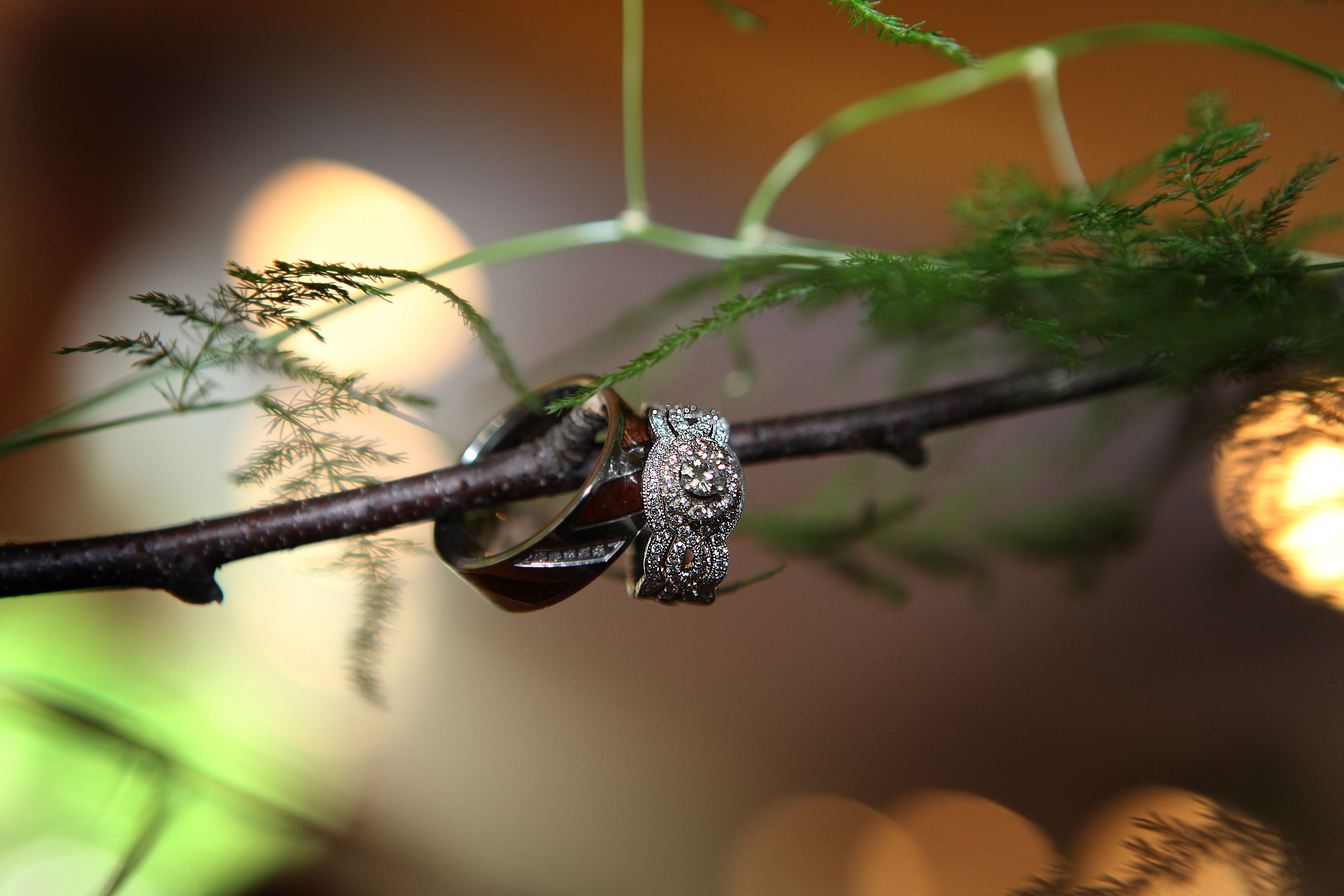 This is an amazing pic. that our photographer took of our wedding rings. Carters Photography
