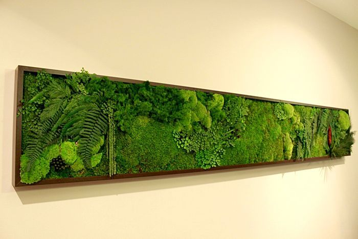 Living picture frame, moss and fern http://www.archiexpo.com/prod ...