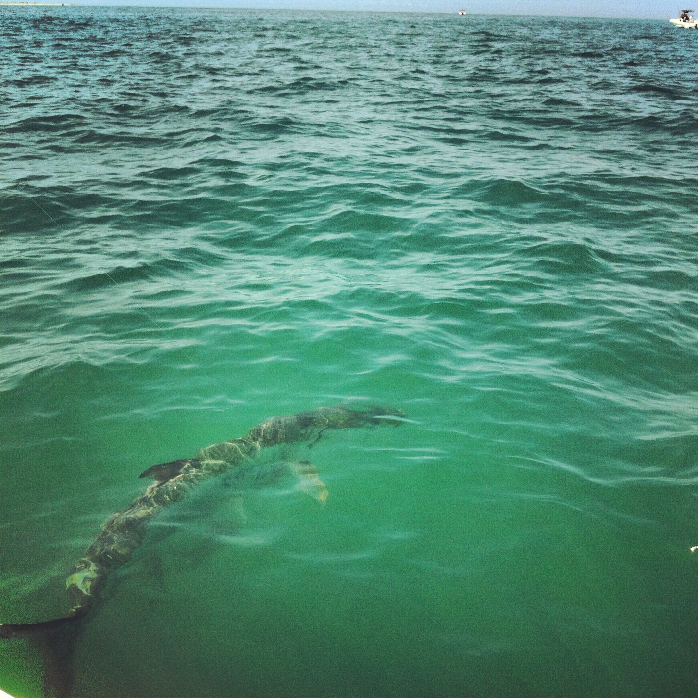 Majestic silver boca grande pass fl saltwater for Florida saltwater fishing
