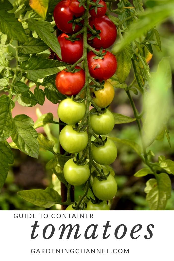 How To Grow Tomato Plants In Containers