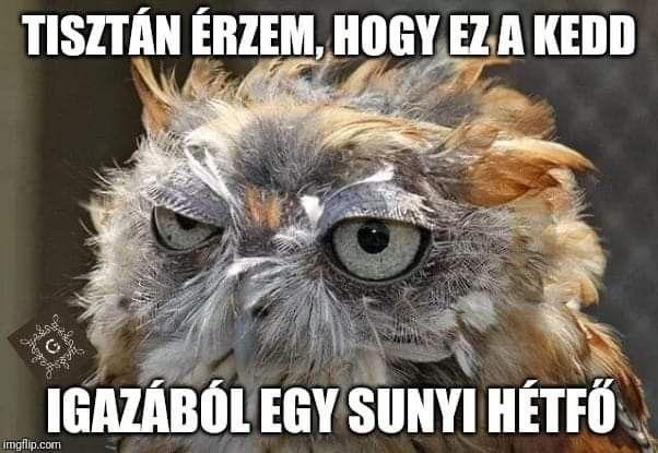 Pin By Kryszta Krisztina On Vicces Trefak Funny Jokes Funny Humor