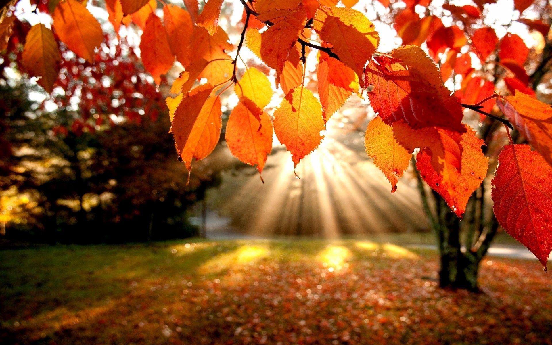 Beautiful Autumn Trees Viewing Gallery Autumn Leaves Wallpaper Autumn Trees Autumn Scenery