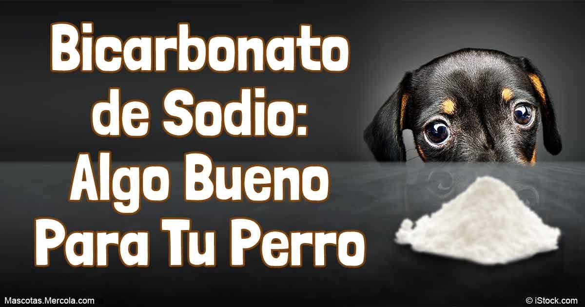 6 Formas En Las Que El Bicarbonato De Sodio Ayuda A Tu Dogs Pet Smell Baking Soda