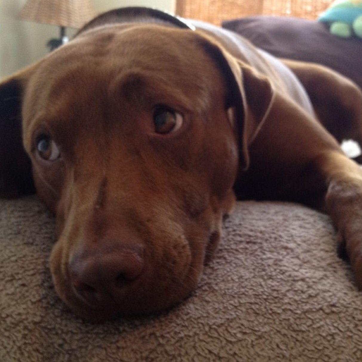 About Us   $100K Challenge Photo Contest   Pinterest   Pets