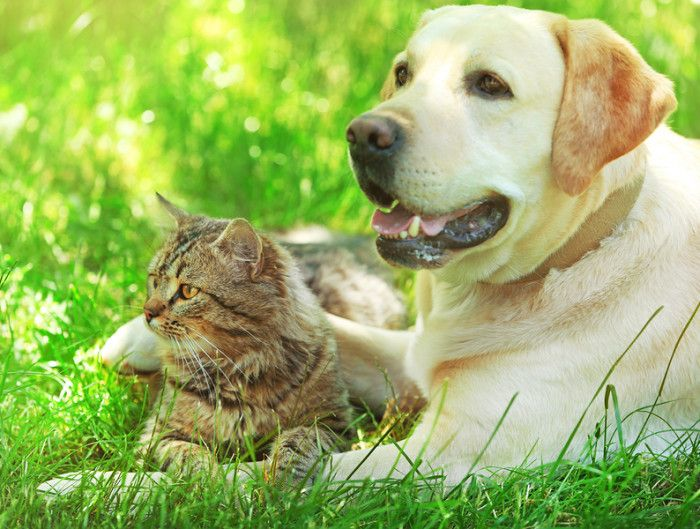 PREPARE YOUR PETS FOR SPRING www.theteelieblog.com  The seasons and weather is changing. Goodbye thick curtains, hello open windows! Goodbye heater, hello air conditioner! But, we're not the only ones adjusting with the season, our pets too. We have to make sure that your fun furry friends are ready for the warmer season of Spring. Read this guide to know how to get prepared. We are featuring products that will keep your pets having fun under the sun this Spring season. #TeelieBlog