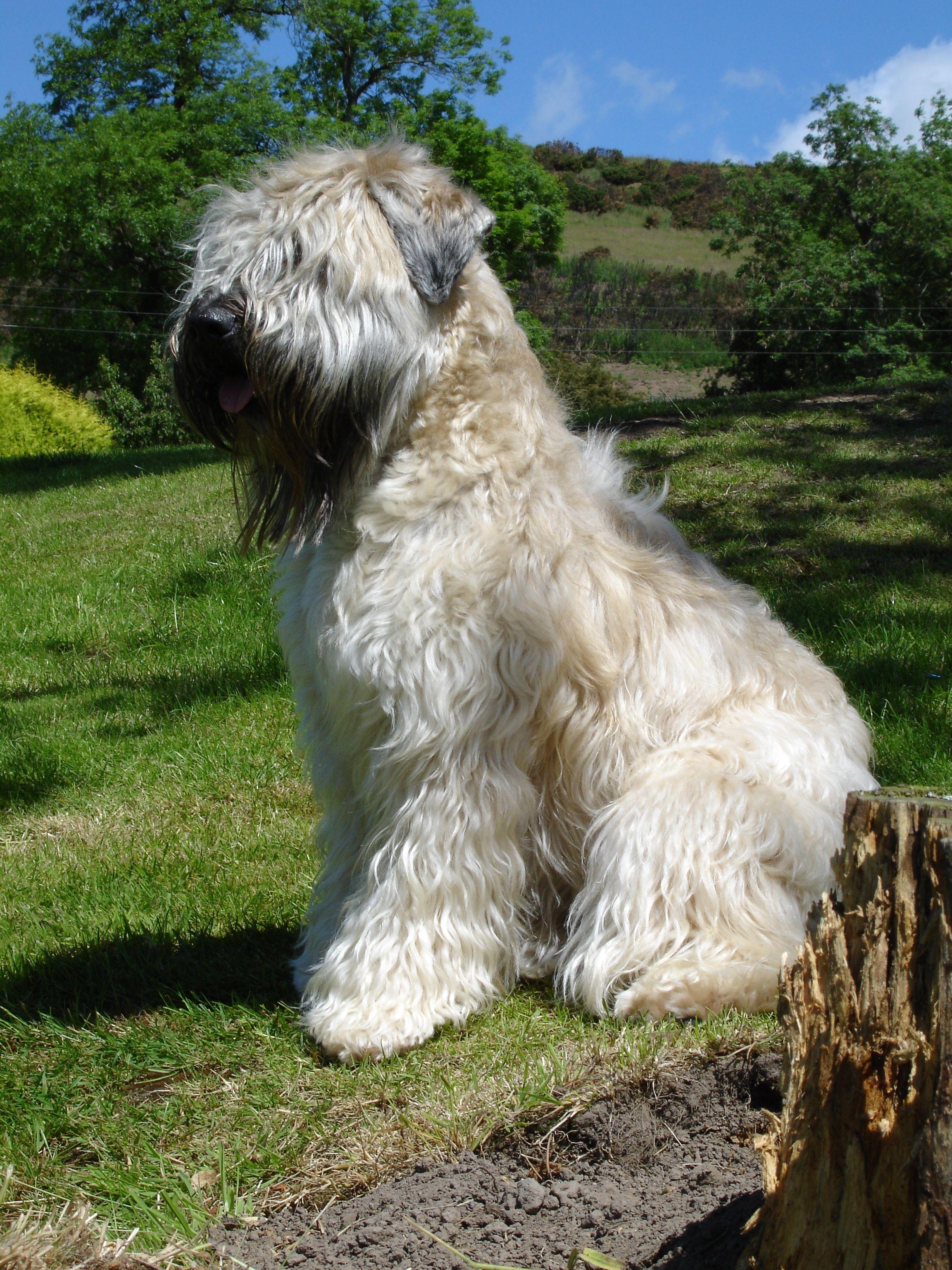 Razas De Perros Por Marisol Santos En Grandes Animales Preciosos Y Divinos Mascotas Perros