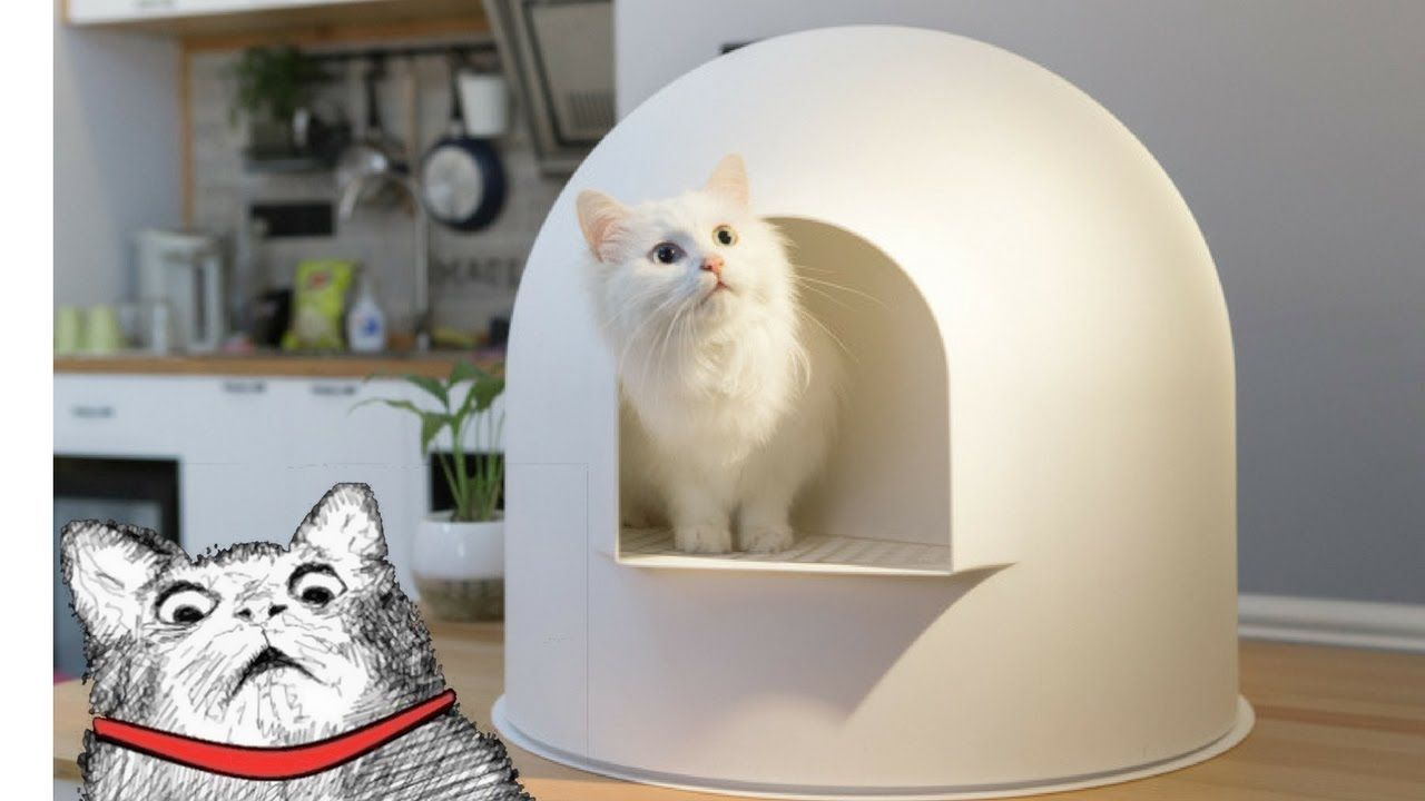 5 Incredible Inventions For Your Cat ✔