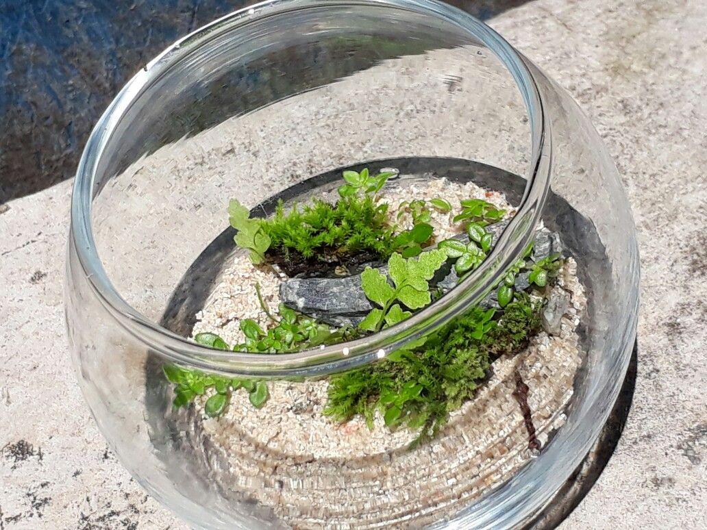 My first mini terrarium mini terrarium plant green craft