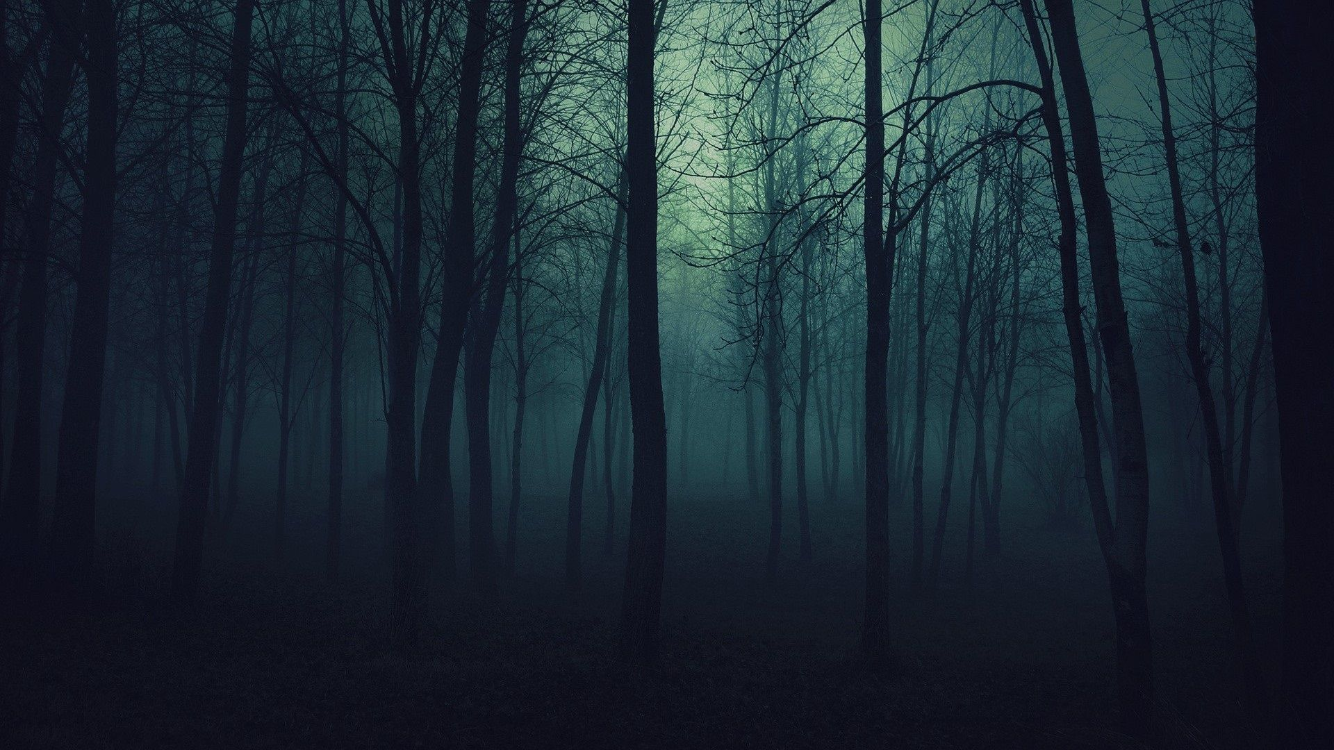 Image result for dark forest pics