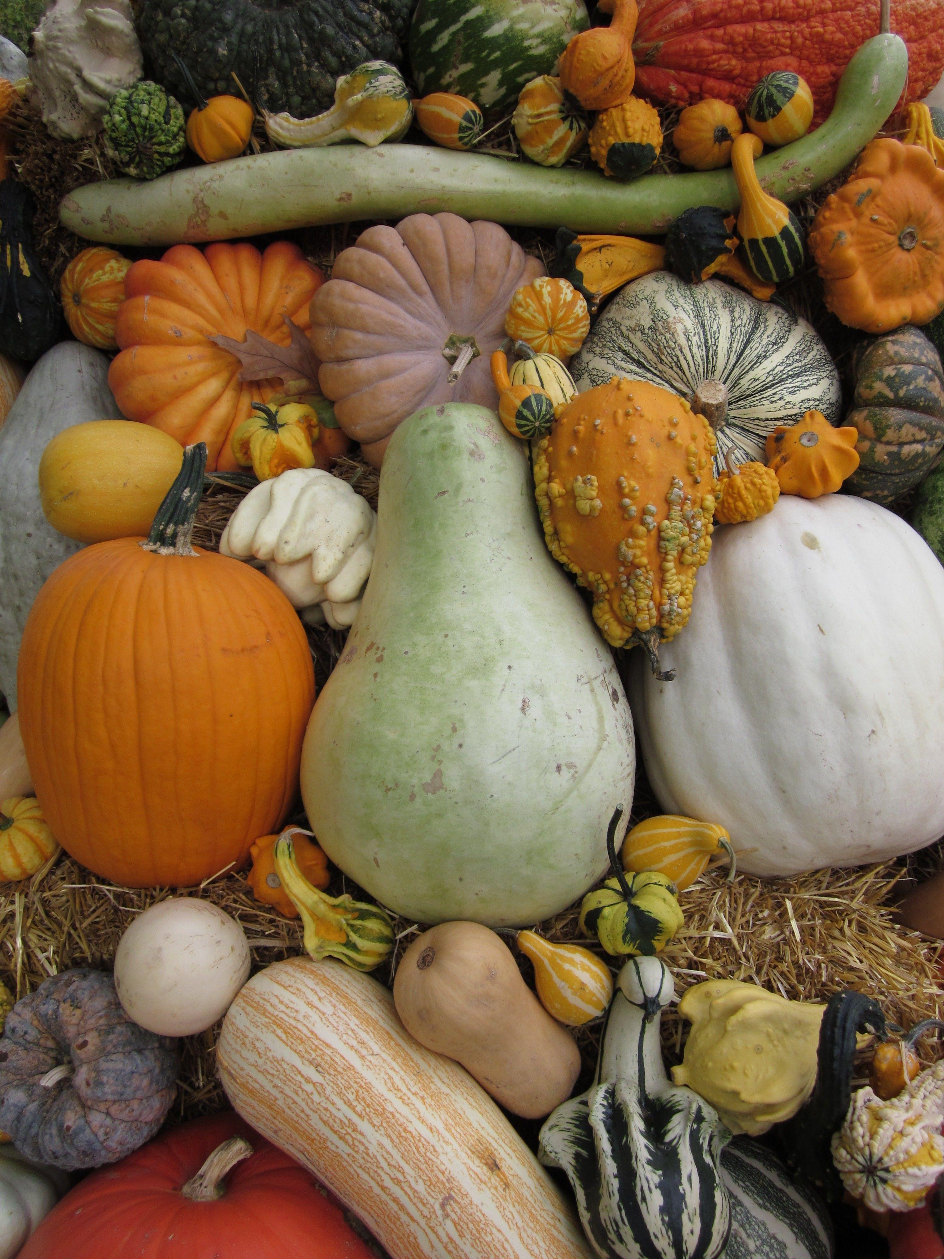 Pumpkins Gourds Squash Love Them All Www