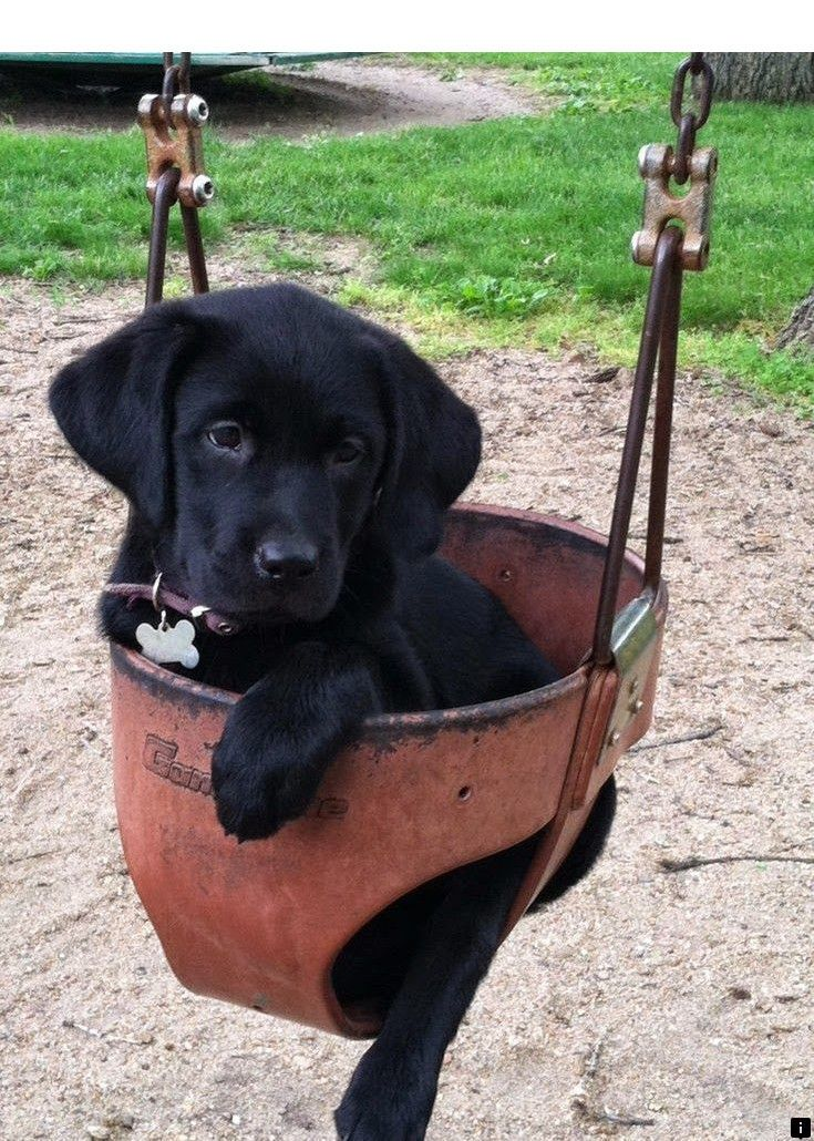Find Out About Puppies For Sale Follow The Link For More