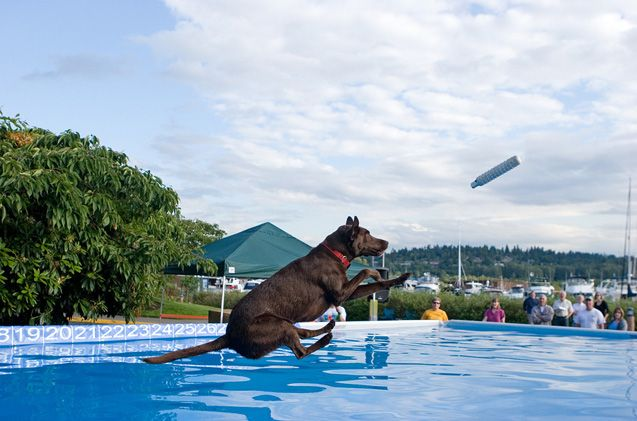 Dock Diving Dogs Are Making A Splash This Summer Dogs Dog