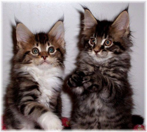 Image from http://pages.total.net/~grandmc/Kittens-frontpage.jpg.
