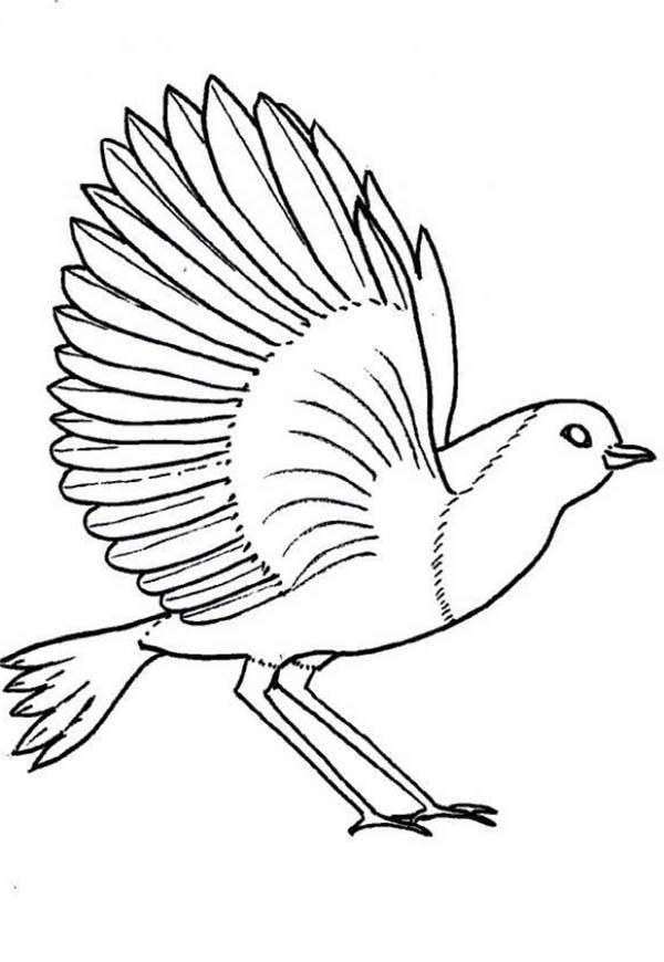 Birds Robin Bird Coloring Page Bird Coloring Pages Robin