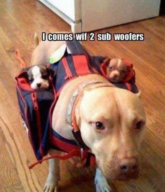 TOP 79 Funny and Cute Puppies Memes                                                                                                                                                                                 More
