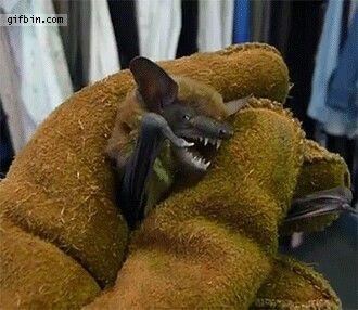Bats gif