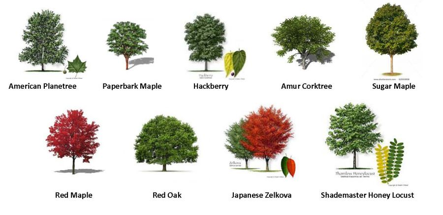 55 trees types of trees patterns trees to plant garden trees tree id for A gardener is planting two types of trees