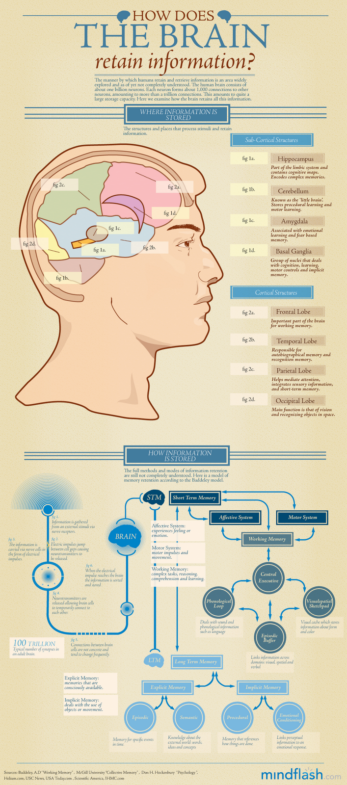 How the brain retains information